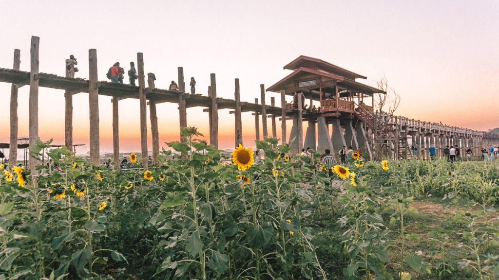 Sunflower field at U Bein bridge
