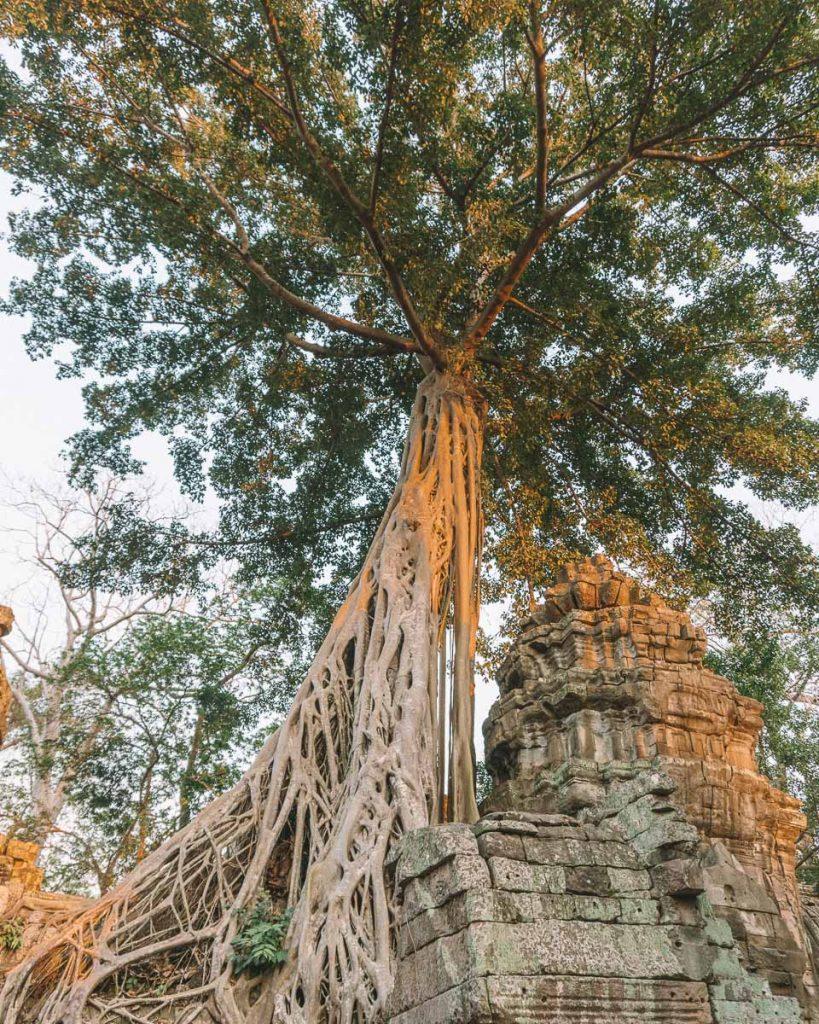 Angkor park